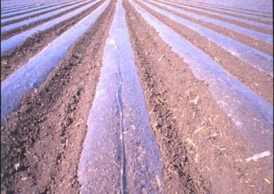 Film para desinfección de suelos