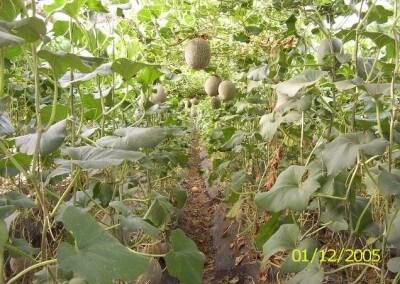 Malla soporte y conducción de cultivos